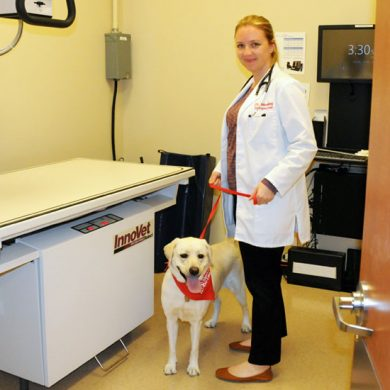 X-ray room at GSiVS with Dr. Meeking and her dog, Maple